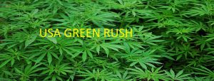 Greenrush looks to make marijuana millionaires!