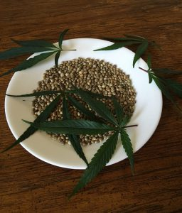 Hemp seed and leaves